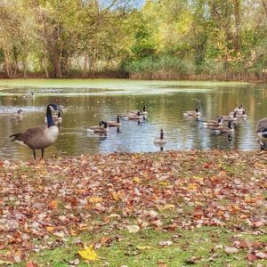 photo At the Swimming Hole - Taken at the Duck Pond on October 24, 2020 by Kathea Smith