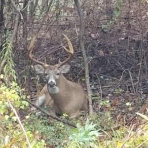 photo Kinder Farm Buck - Taken while walking the Perimeter Trail between mile markers 1.2 and 1.3, on October 25, 2020 by Robert Hobson