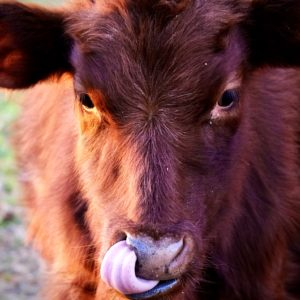 photo Mmm, Mmm Good - Taken in the cow pasture on November 28, 2020 by Adam Slote