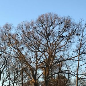 photo Winter Trees - Taken on November 20, 2020 by Katherine Hill