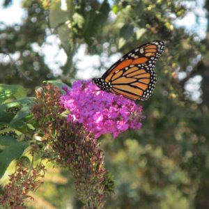 photo Butterfly - Taken on October 9, 2020 by Isabella Lind